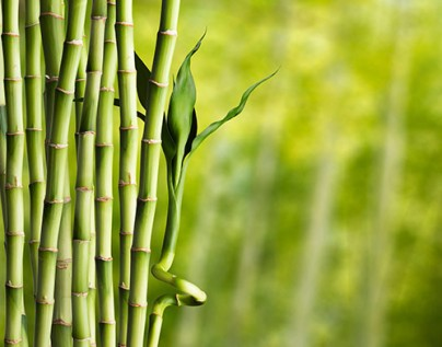 beauty-and-the-bamboo-499x392